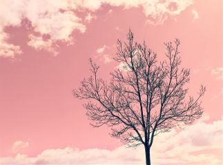 nature treesilhouette skyandcloudsbackground pinksky fantasy freetoedit