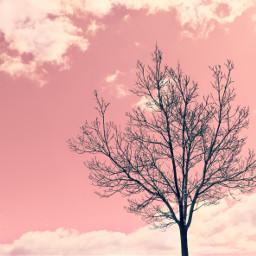nature treesilhouette skyandcloudsbackground pinksky hueeffect freetoedit