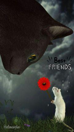 freetoedit cat mouse editedbyme friendshipdaystickerremix