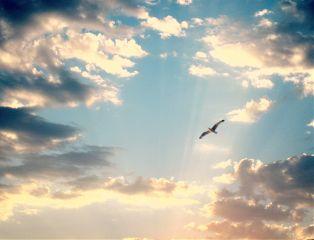freetoedit sky clouds seagulls blue