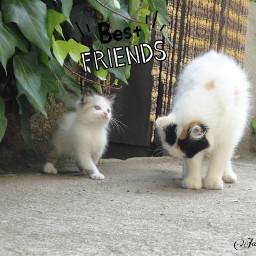 freetoedit bestfriends