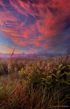 colorful cute flower nature love hdr photography summer peaceful remixit