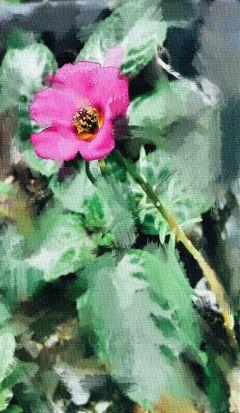 flower emotions love nature pencilart