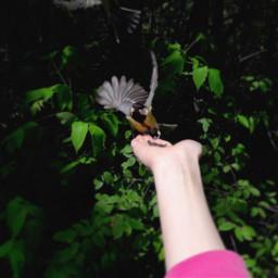 freetoedit fly bird nature park
