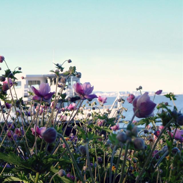 #lookingthrough #hudsonriver #newyorkcity #boat #flowers #freetoedit #myoriginalphoto