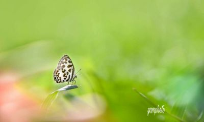 butterfly photography nature freetoedit