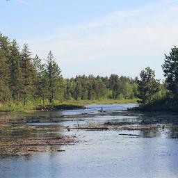 freetoedit swamp landscape nature nofilter