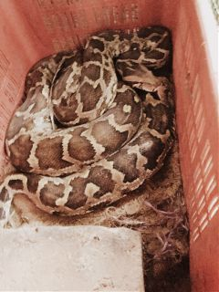 freetoedit snake today sleeping close