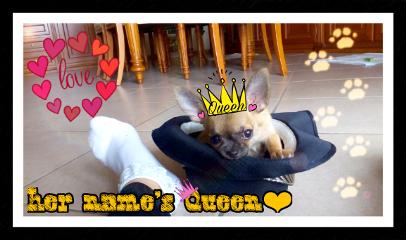 puppydog cute love queen freetoedit