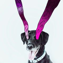 freetoedit grimeart dog