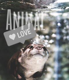 freetoedit animal title dailysticker remixit