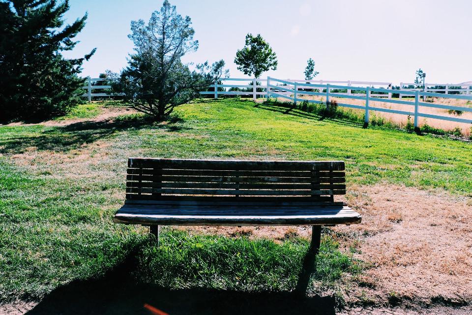 #bench #grass #wood #gate #tree #sky #hike #adventure #nevada #nature #sit #freetoedit #remixit #remix #dpcbenches