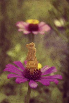 freetoedit woman flower flowers old