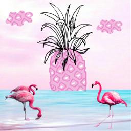 freetoedit flamingoes gemfest pinneapple clouds