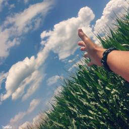 freetoedit cornfield me bigsky myoriginalphoto