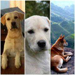freetoedit dogs