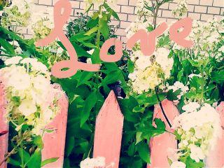 цветы любовь лето2017 романтика розоваялихоманка freetoedit