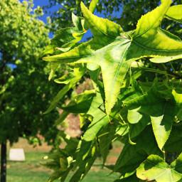 freetoedit green verde vegetation tree