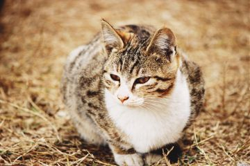 photography outdoors pet domestic animal