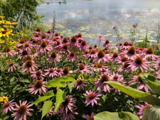 naturephotography nature landscape unedited freetoedit