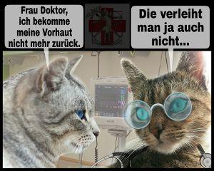 me medicat patient cute cat freetoedit