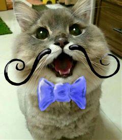 freetoedit cute petsandanimals bow cat