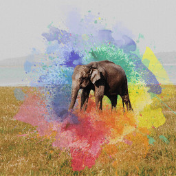freetoedit coloursplash elephant grasslands sky