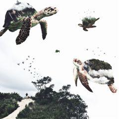 freetoedit surrealism turtles floating