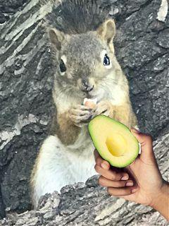 avocadostickerremix freetoedit dailysticker