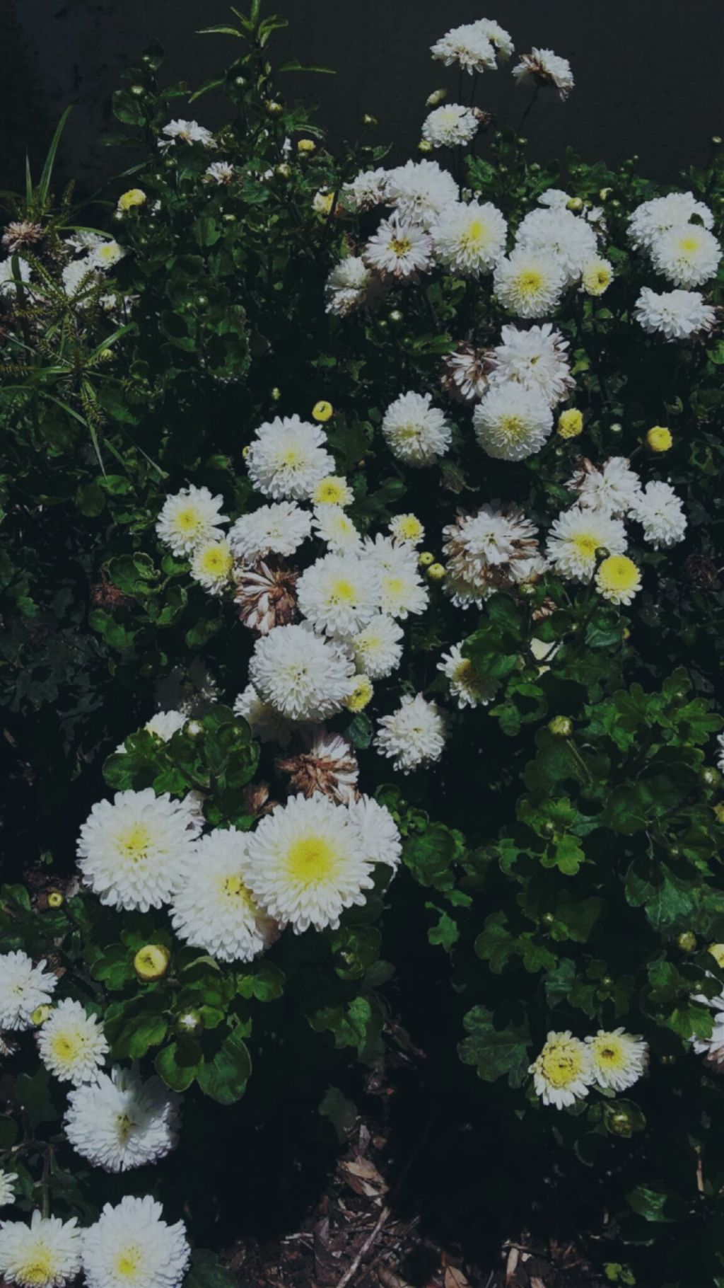 Flowers pale tumblr grunge aesthetic sad tumblrgirl flowers pale tumblr grunge aesthetic sad tumblrgirl izmirmasajfo