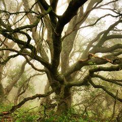 freetoedit interesting california landscape nature