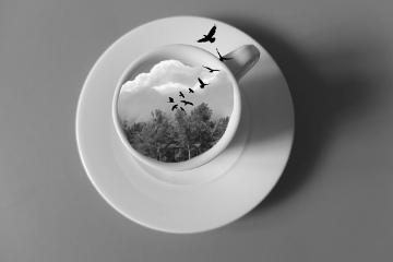 freetoedit blackandwhite cup birds cloud