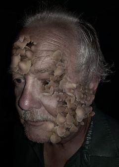 surreal mushrooms saveoursouls
