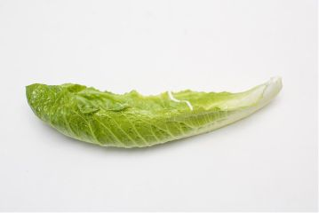 freetoedit lettuce