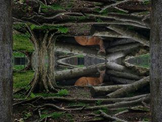 mirrored photography myart deer digitalart
