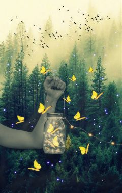 hand jar yellowbutterfly forest myedit freetoedit