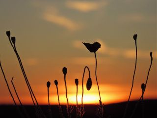 photography sunset plants emotions silhouette freetoedit