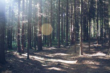 freetoedit forest woods awalkinthewoods bokeh