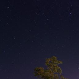 sky tree stars night galaxy