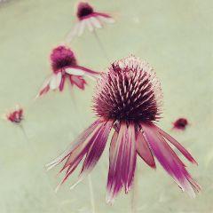 flowers love emotions