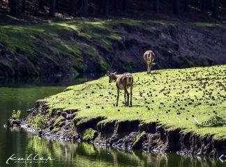 petsandanimals landscape nature germendorf rotwild
