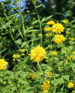 flowers yellow nofilter nature naturephotography freetoedit