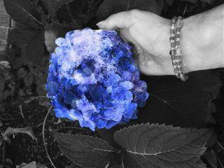 freetoedit colorsplash nature spring cute
