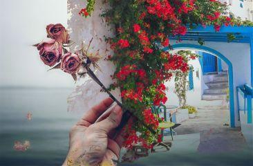 freetoedit rose roseandplaces