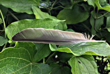 feather nature naturephotography