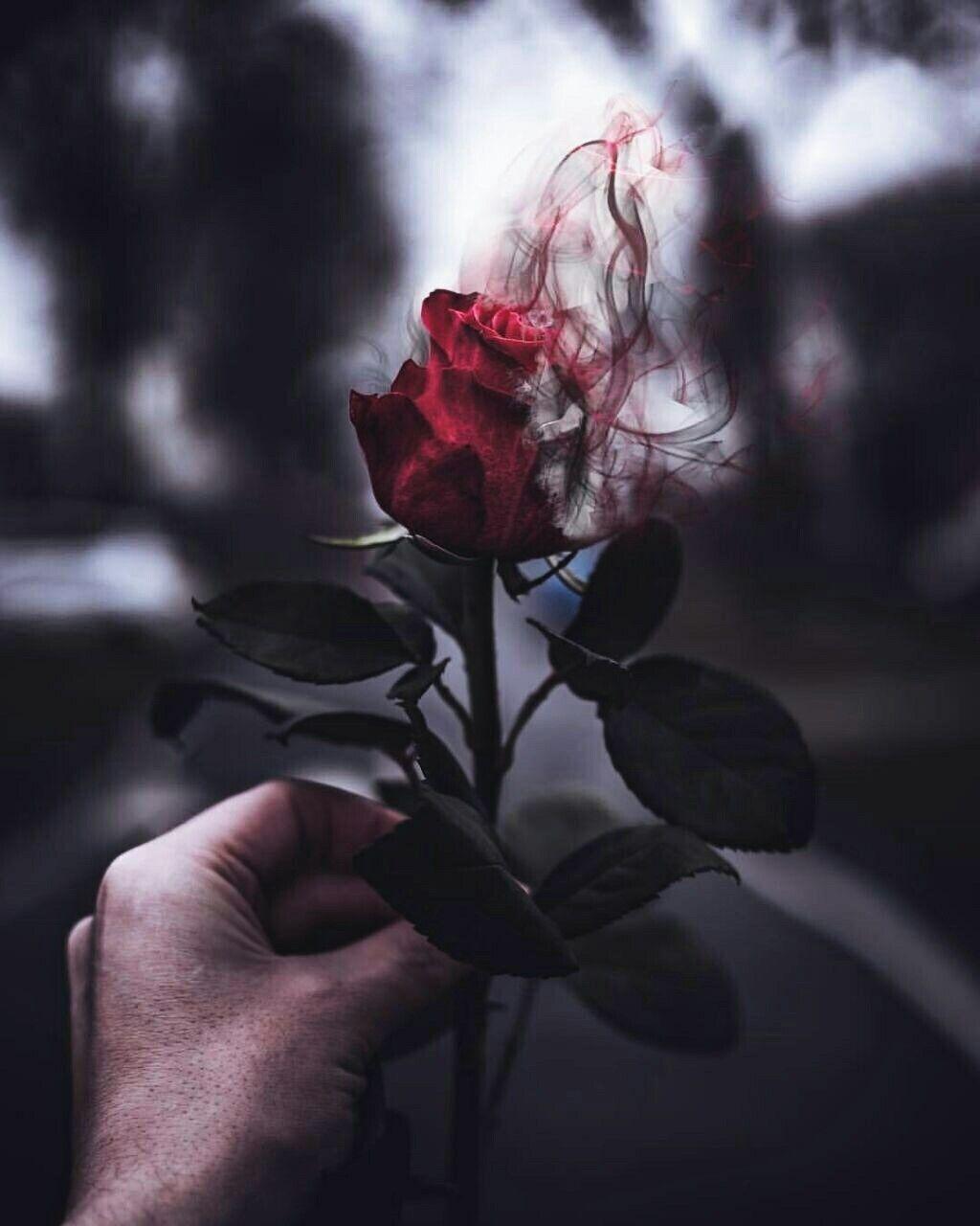 Rose Roses Red Humo Grunge Tumblr