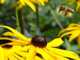 bee flower insects flying nature