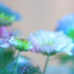 flowers whiteandblueflowers nature