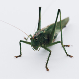 macro insect nature photography nikon freetoedit