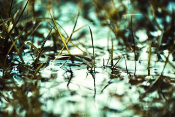 photography outdoors garden grass rain